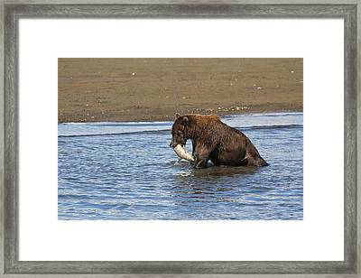 Another Successful Catch Framed Print by David Wilkinson