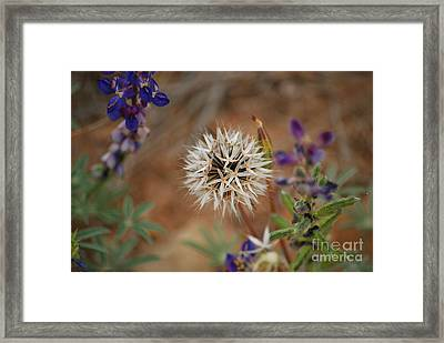 Another White Flower Framed Print