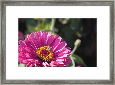 Framed Print featuring the photograph Another Work Day by Lora Lee Chapman