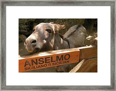 Framed Print featuring the photograph Anselmo by Dianne Levy