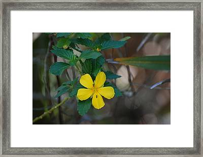 Framed Print featuring the photograph Ant Flowers by Rob Hans