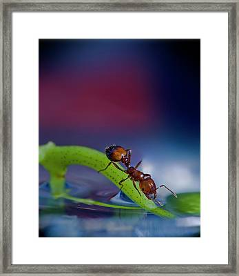 Ant In A Colorful World Framed Print by Bob Rasulev