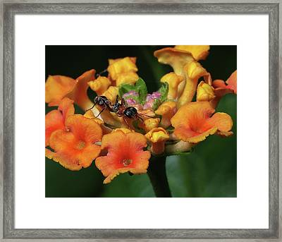 Framed Print featuring the photograph Ant On Plant  by Richard Rizzo