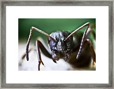 Ant Smile Framed Print by Ryan Kelly