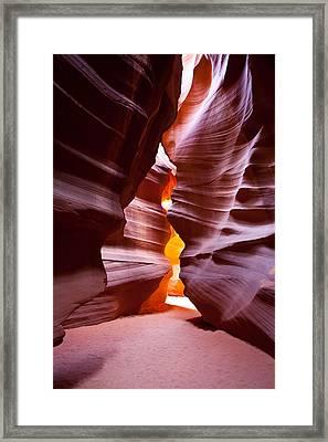 Antelope 6 Framed Print