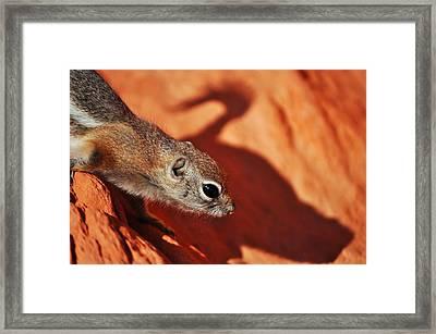 Antelope Ground Squirrel II Framed Print