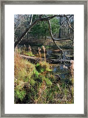 Antelope Springs Ix Framed Print by Ron Cline