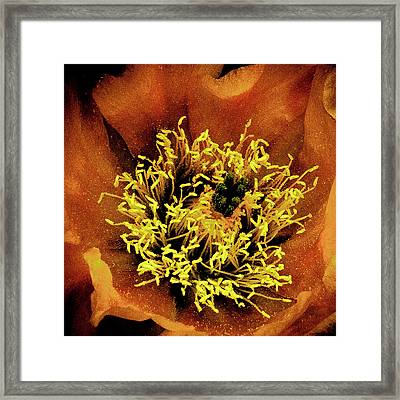 Anthers Framed Print by David Patterson