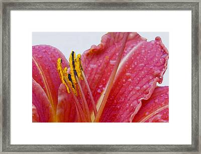 Anthers Framed Print by Robert OP Parrish