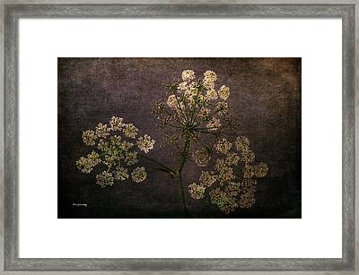 Framed Print featuring the photograph Anthriscus Sylvestris by Randi Grace Nilsberg