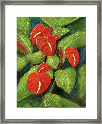 Anthurium Flowers #231 Framed Print by Donald k Hall