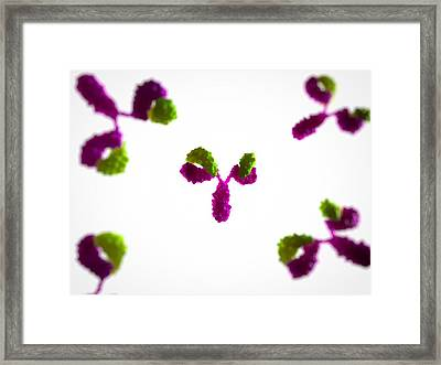 Antibodies, Artwork Framed Print by Sciepro