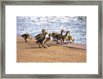 Anticapation  Framed Print by Tammy Espino