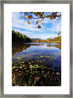 Anticipation Framed Print by Chad Dutson