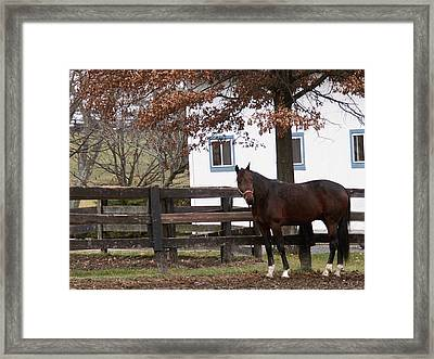 Anticipation Framed Print by Chuck Shafer
