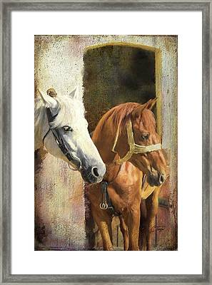 Anticipation Framed Print by Colleen Taylor