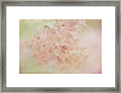Framed Print featuring the photograph Anticipation  by Connie Handscomb
