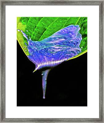 Anticipation Framed Print by Mac Titmus