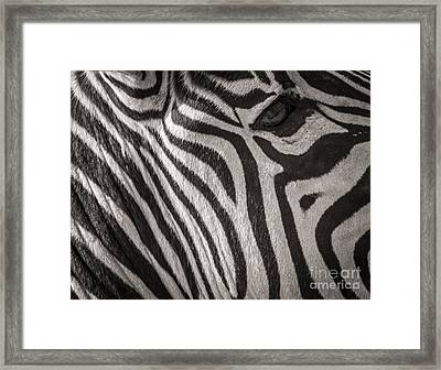Anticipation  Framed Print
