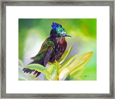 Antillean Crested Hummingbird Framed Print