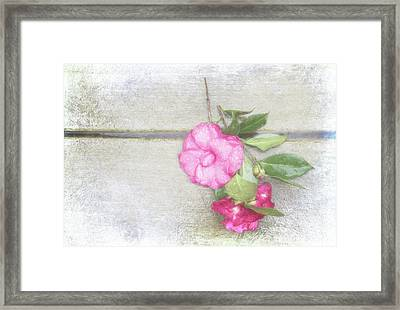 Antique Camellias Framed Print by Terry Davis