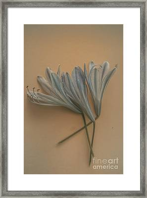 Antique Floral Art Framed Print by Jorgo Photography - Wall Art Gallery