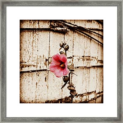 Antique Flower Framed Print
