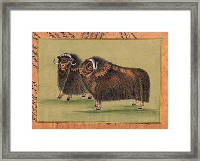 Antique-painting-artwork-artist-gallery-animal-himalayan-thar Painting. Framed Print by M B Sharma
