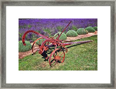 Antique Plow And Lavender Framed Print by Olivier Le Queinec