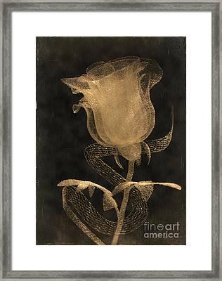 Antique Rose Of Glass Framed Print