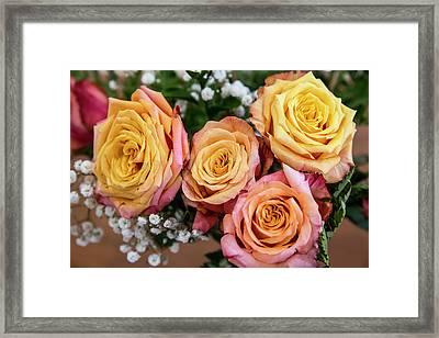 Antique Roses Framed Print by Niel Morley