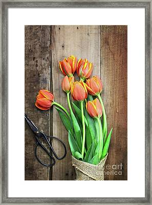Framed Print featuring the photograph Antique Scissors And Bouguet Of Tulips by Stephanie Frey