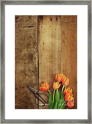 Framed Print featuring the photograph Antique Scissors And Tulips by Stephanie Frey