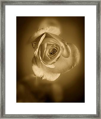 Antique Soft Rose Framed Print by M K  Miller