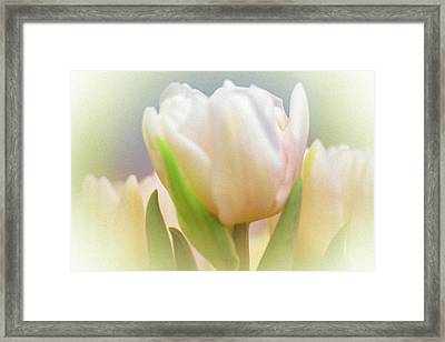 Antiqued Tulip Framed Print by Mother Nature