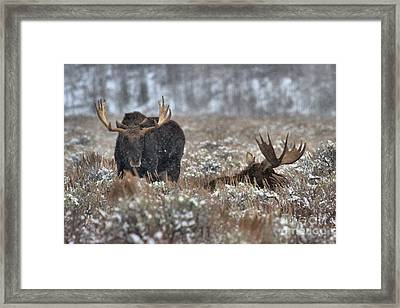 Framed Print featuring the photograph Antlers In The Brush by Adam Jewell