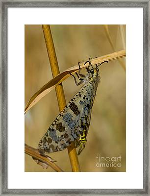 Antlion In Greece Framed Print by Steen Drozd Lund