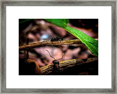 Ants Adventure Framed Print by Bob Orsillo