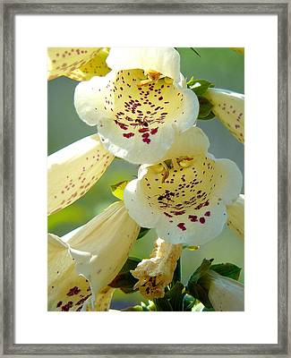 Ants Gone Spotty Framed Print by Lisa Knechtel