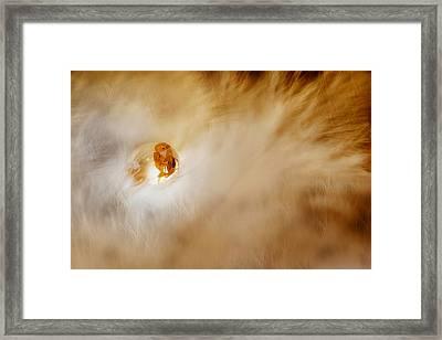 Ants In The Dew Framed Print by Agus Wahyudi