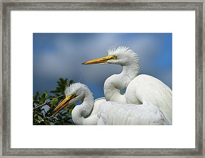 Anxiously Waiting Framed Print
