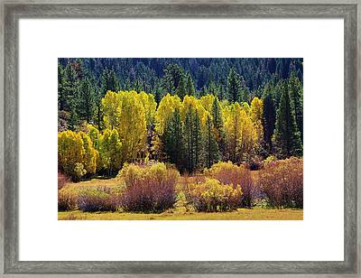 Any Color You Want Framed Print