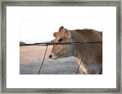 Framed Print featuring the photograph Any Cow  by Lora Lee Chapman