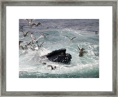 Any Leftovers Framed Print