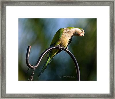 Any Peanuts In There Framed Print