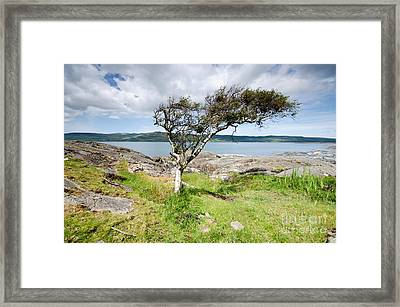 Anyway The Wind Blows Framed Print by Nichola Denny