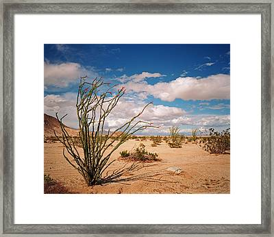 Anza Borrego Desert Framed Print
