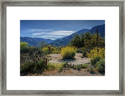 Framed Print featuring the photograph Anza-borrego Desert State Park Desert Flowers by Randall Nyhof