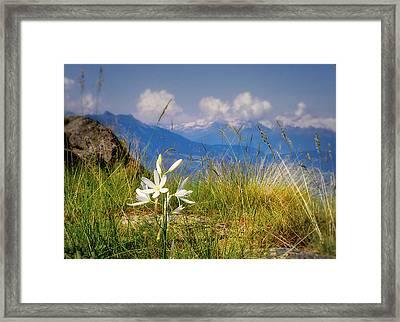 Aosta Flowers Framed Print