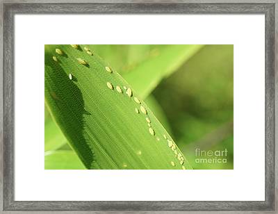 Aphid Family Framed Print